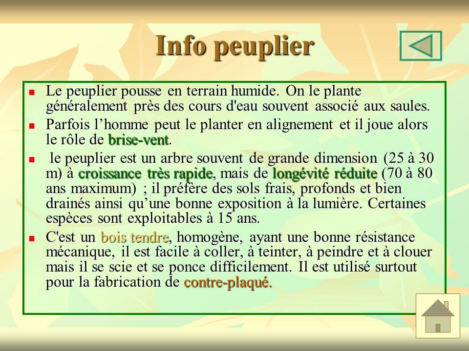 Info peuplier Le peuplier pousse en terrain humide. On le plante généralement près des cours d'eau souvent associé aux saules. Le peuplier pousse en t