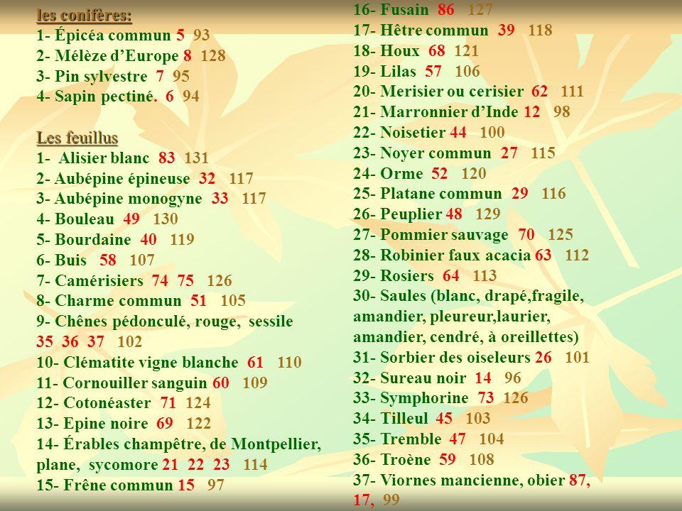 les conifères: 1- Épicéa commun 5 93 2- Mélèze dEurope 8 128 3- Pin sylvestre 7 95 4- Sapin pectiné. 6 94 Les feuillus 1- Alisier blanc 83 131 2- Aubé