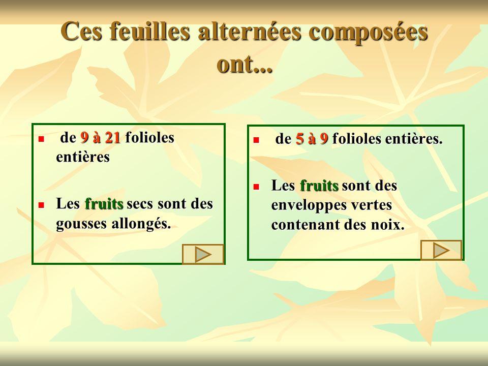 Ces feuilles alternées composées ont... de 9 à 21 folioles entières de 9 à 21 folioles entières Les fruits secs sont des gousses allongés. Les fruits