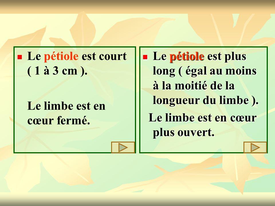 Le pétiole est court ( 1 à 3 cm ). Le limbe est en cœur fermé. Le pétiole est plus long ( égal au moins à la moitié de la longueur du limbe ). Le péti