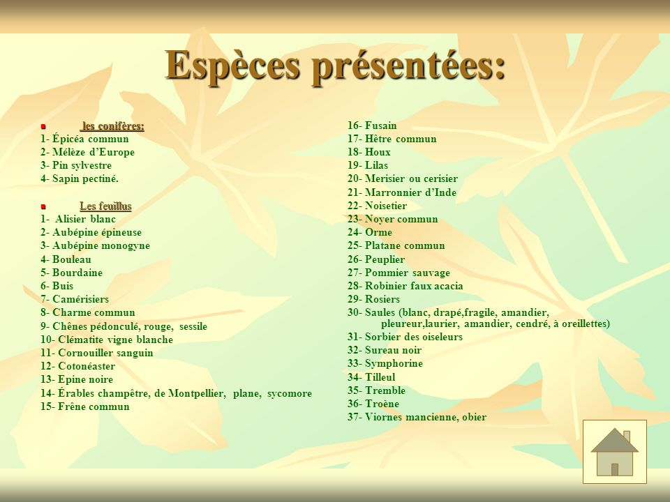 Espèces présentées: les conifères: les conifères: 1- Épicéa commun 2- Mélèze dEurope 3- Pin sylvestre 4- Sapin pectiné. Les feuillus Les feuillus 1- A