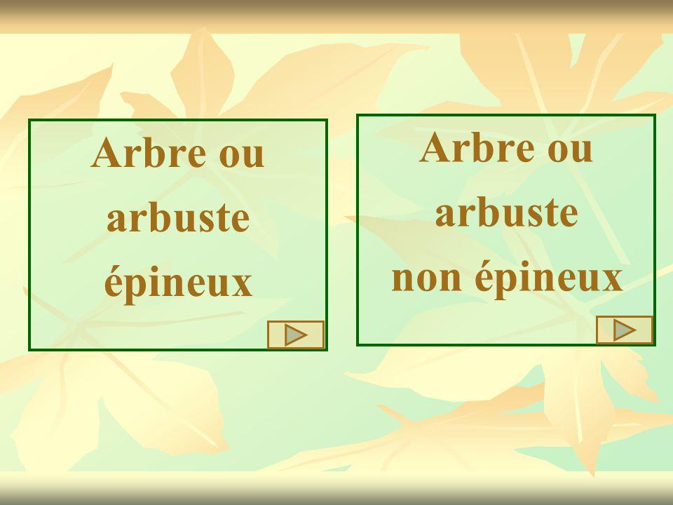 Arbre ou arbuste épineux Arbre ou arbuste non épineux