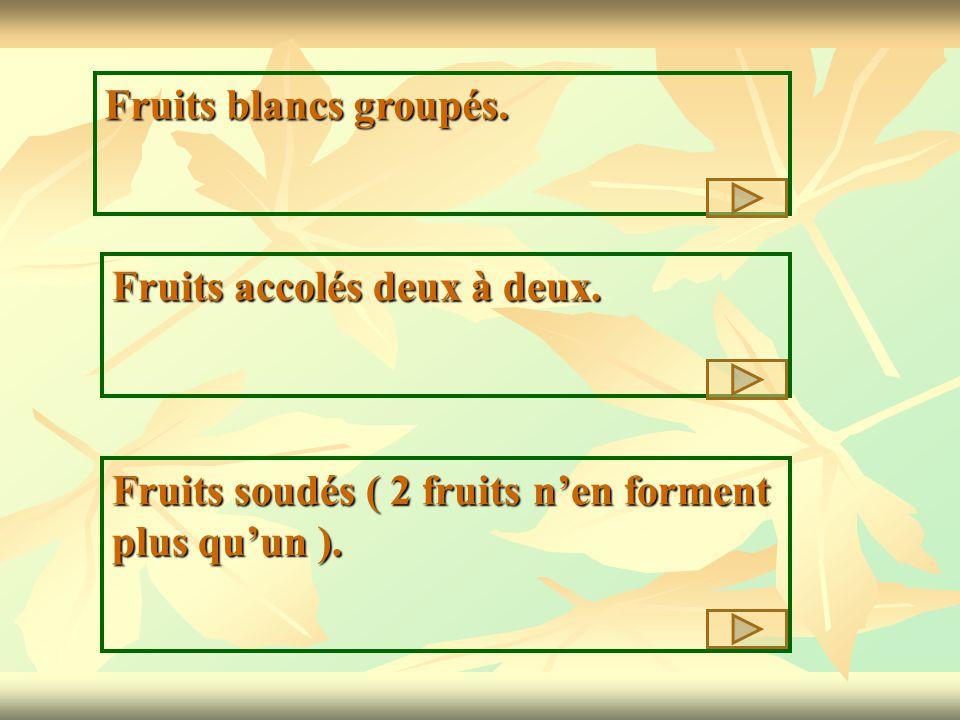 Fruits blancs groupés. Fruits accolés deux à deux. Fruits soudés ( 2 fruits nen forment plus quun ).