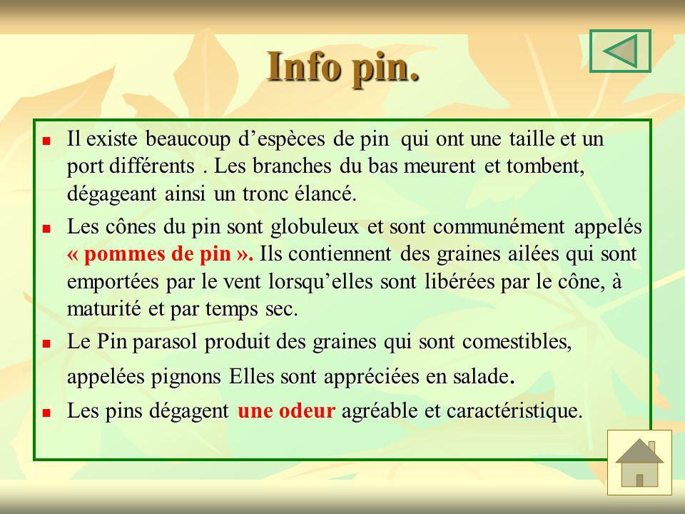 Info pin. Il existe beaucoup despèces de pin qui ont une taille et un port différents. Les branches du bas meurent et tombent, dégageant ainsi un tron