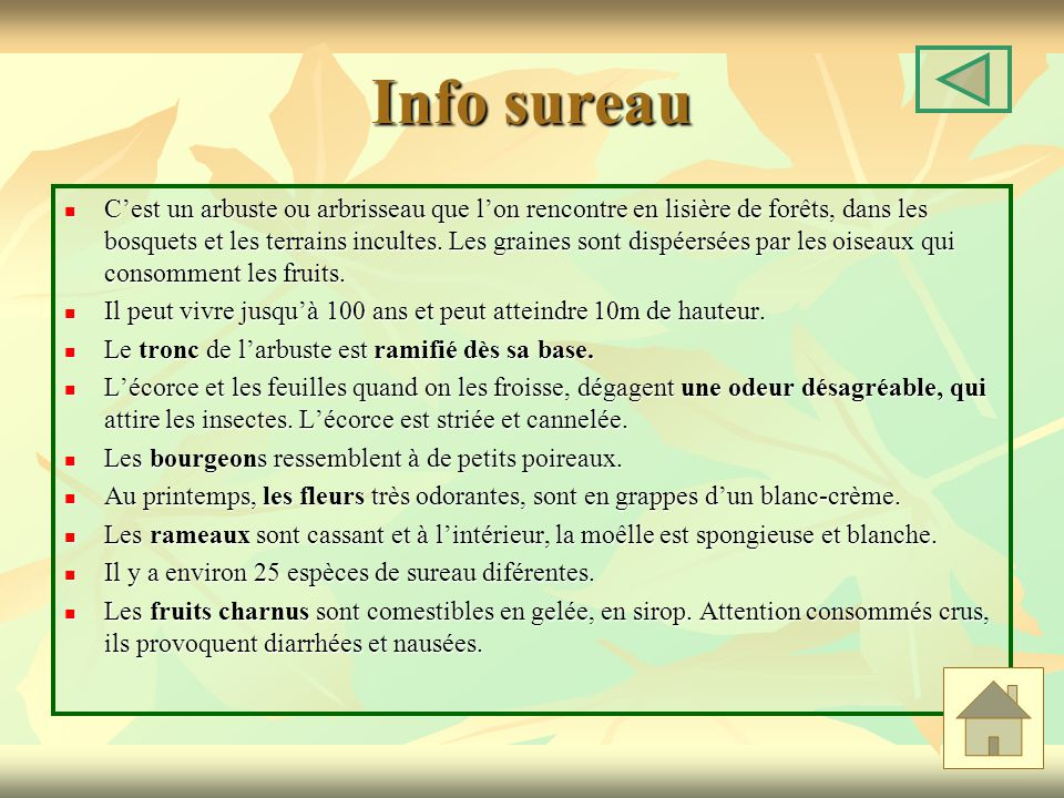 Info sureau Cest un arbuste ou arbrisseau que lon rencontre en lisière de forêts, dans les bosquets et les terrains incultes. Les graines sont dispéer