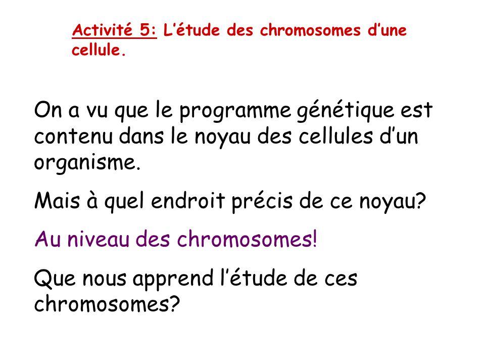 Comment pourrait-on ranger ces chromosomes?