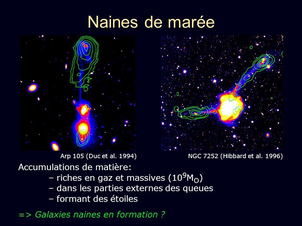 Accumulations de matière: – riches en gaz et massives (10 9 M O ) – dans les parties externes des queues – formant des étoiles => Galaxies naines en f
