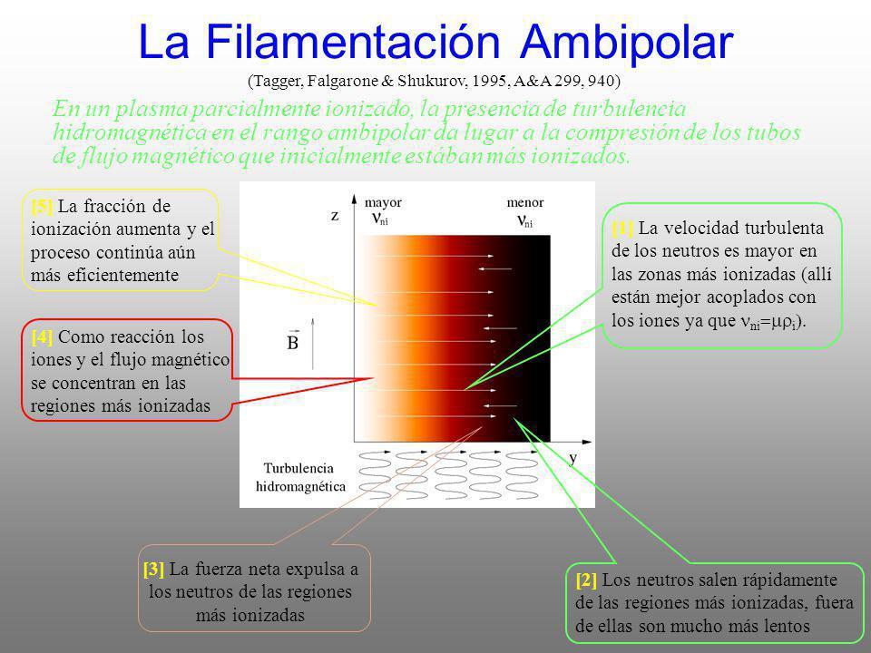 La Filamentación Ambipolar (Tagger, Falgarone & Shukurov, 1995, A&A 299, 940) [1] La velocidad turbulenta de los neutros es mayor en las zonas más ionizadas (allí están mejor acoplados con los iones ya que ni i [4] Como reacción los iones y el flujo magnético se concentran en las regiones más ionizadas [3] La fuerza neta expulsa a los neutros de las regiones más ionizadas [2] Los neutros salen rápidamente de las regiones más ionizadas, fuera de ellas son mucho más lentos [5] La fracción de ionización aumenta y el proceso continúa aún más eficientemente En un plasma parcialmente ionizado, la presencia de turbulencia hidromagnética en el rango ambipolar da lugar a la compresión de los tubos de flujo magnético que inicialmente estában más ionizados.