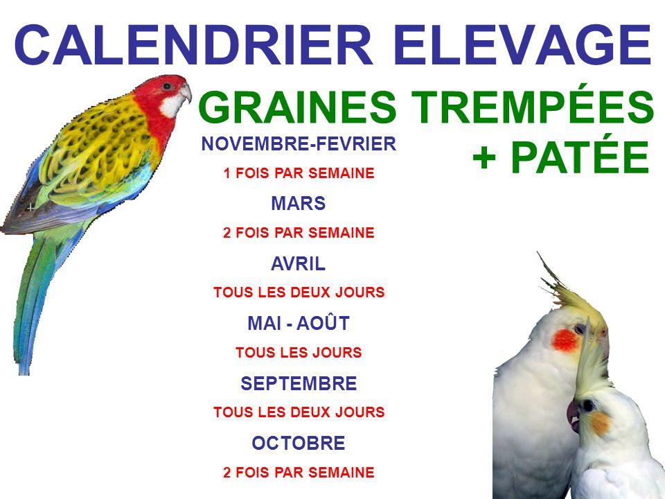 CALENDRIER ELEVAGE NOVEMBRE-FEVRIER 1 FOIS PAR SEMAINE MARS 2 FOIS PAR SEMAINE AVRIL TOUS LES DEUX JOURS MAI - AOÛT TOUS LES JOURS SEPTEMBRE TOUS LES DEUX JOURS OCTOBRE 2 FOIS PAR SEMAINE GRAINES TREMPÉES + PATÉE