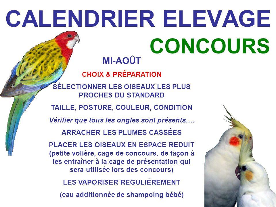 CALENDRIER ELEVAGE CONCOURS MI-AOÛT CHOIX & PRÉPARATION SÉLECTIONNER LES OISEAUX LES PLUS PROCHES DU STANDARD TAILLE, POSTURE, COULEUR, CONDITION Vérifier que tous les ongles sont présents….