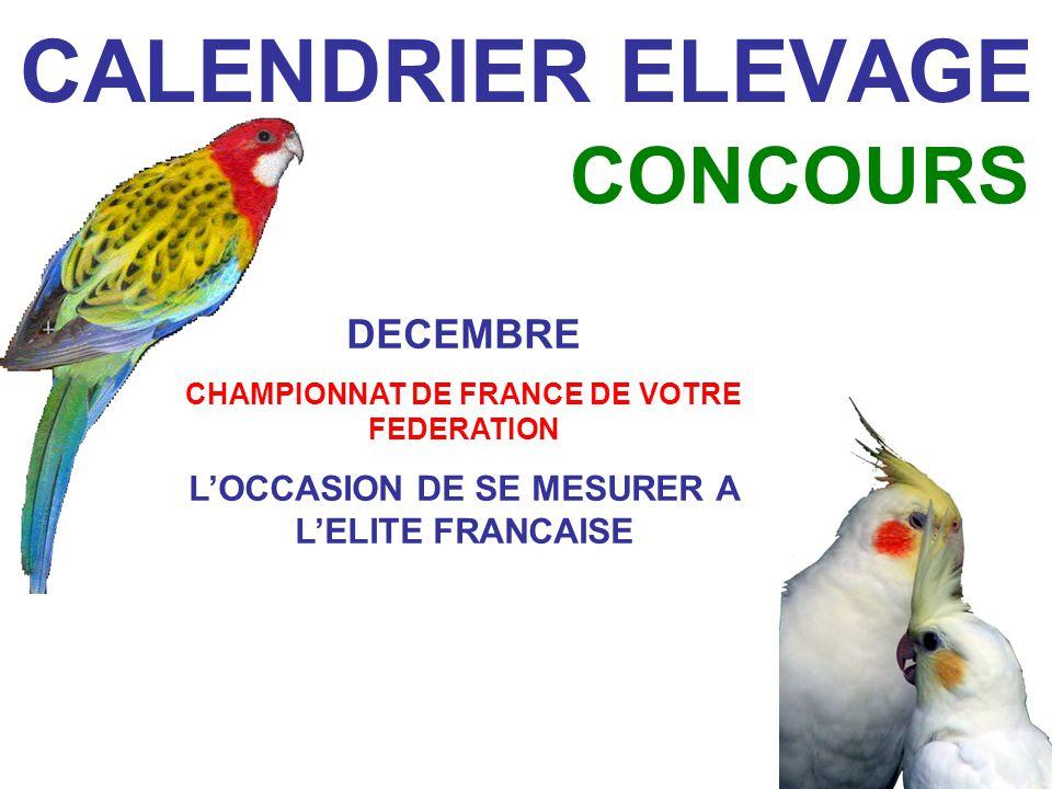 CALENDRIER ELEVAGE CONCOURS DECEMBRE CHAMPIONNAT DE FRANCE DE VOTRE FEDERATION LOCCASION DE SE MESURER A LELITE FRANCAISE