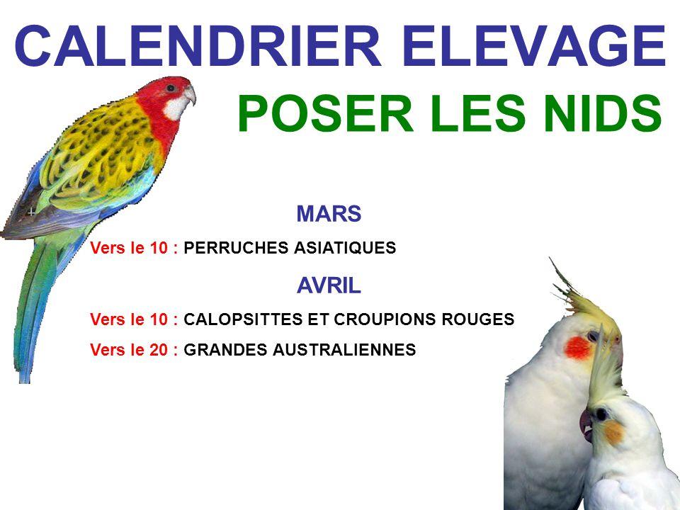 CALENDRIER ELEVAGE MELANGE DE GRAINES + FRUITS & LEGUMES + PATEE DÉLEVAGE + GRAINES TREMPÉES NOURRITURE