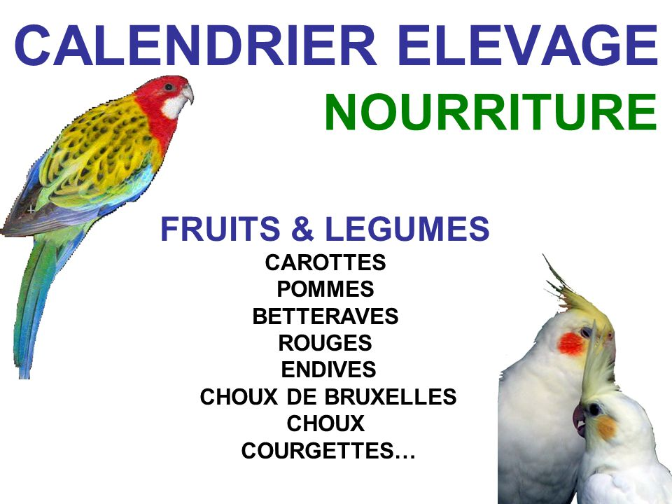 CALENDRIER ELEVAGE CONCOURS OCTOBRE NOVEMBRE CONCOURS LOCAUX & RÉGIONAUX & CHAMPIONNAT DE FRANCE CDE POUR LE PLAISIR DES CONCOURS, CONFORTER OU INFIRMER SES CHOIX, RENCONTRER DAUTRES ÉLEVEURS, COMPARER SES OISEAUX (et évaluer les juges….)