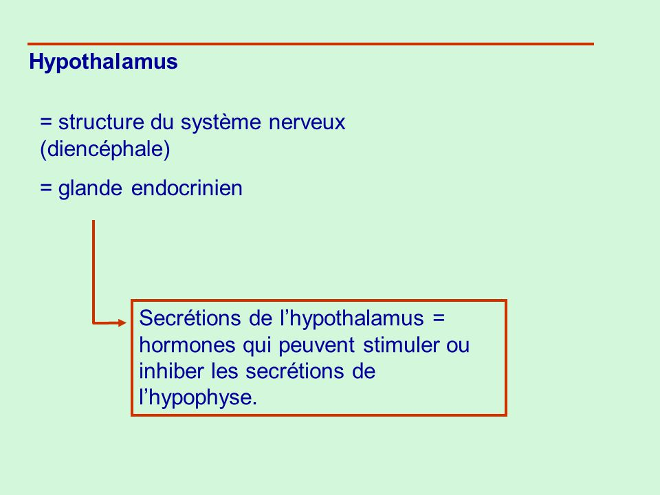 Hypothalamus = structure du système nerveux (diencéphale) = glande endocrinien Secrétions de lhypothalamus = hormones qui peuvent stimuler ou inhiber