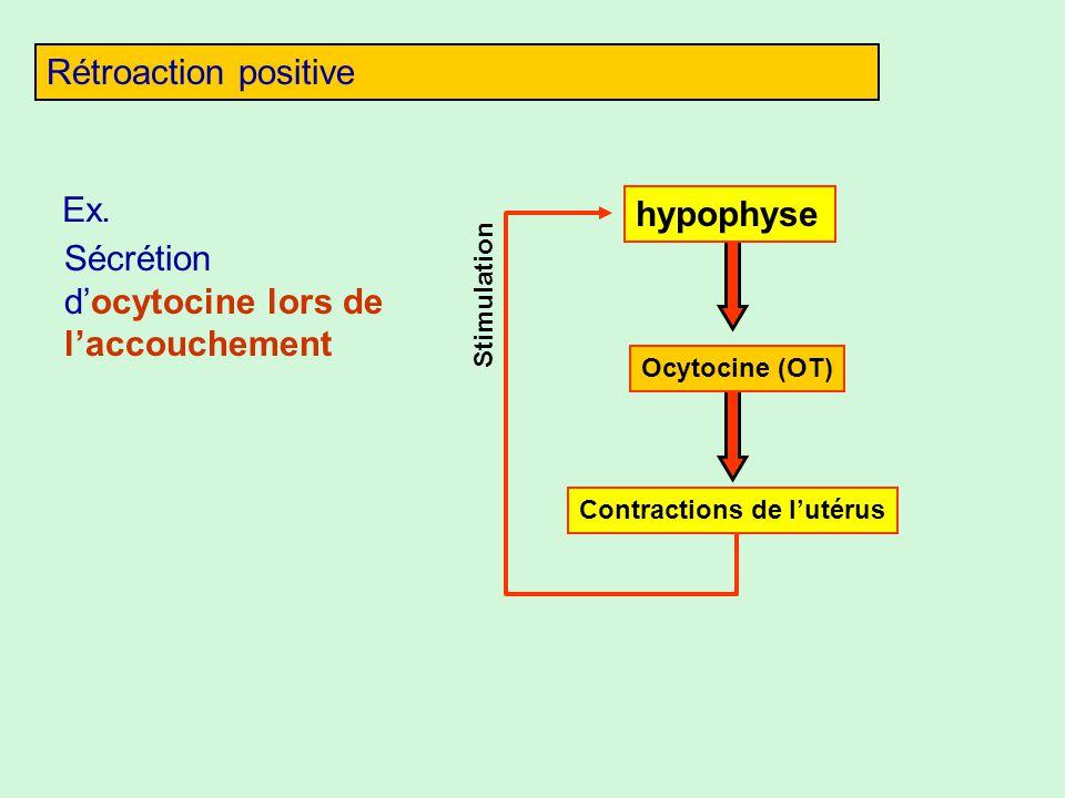 Rétroaction positive Stimulation Ex. Sécrétion docytocine lors de laccouchement Contractions de lutérus hypophyse Ocytocine (OT)