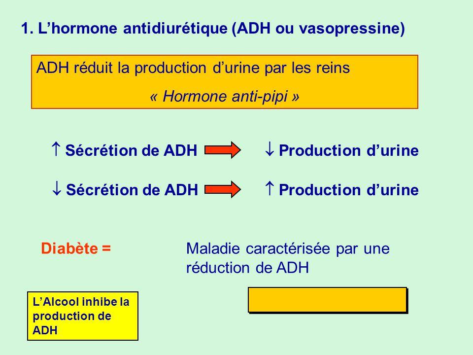 1. Lhormone antidiurétique (ADH ou vasopressine) ADH réduit la production durine par les reins « Hormone anti-pipi » Sécrétion de ADH Production durin