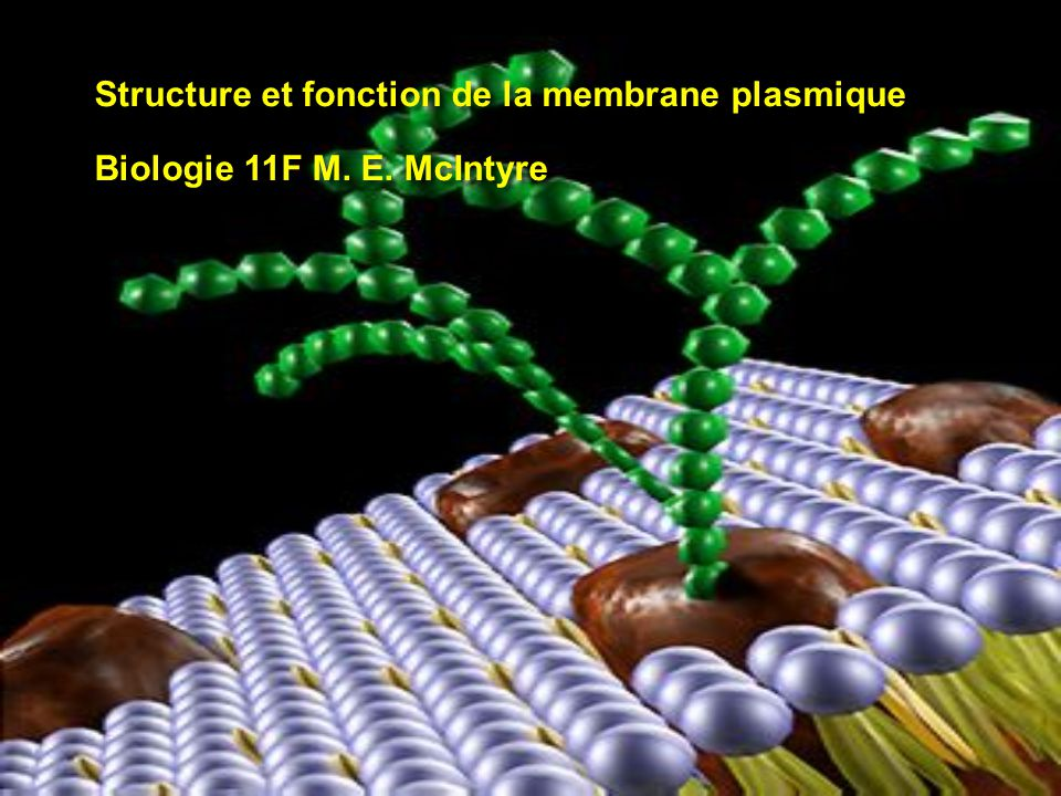 Structure et fonction de la membrane plasmique BiBiologie 11F M. E. McIntyre Structure et fonction de la membrane plasmique BiBiologie 11F M. E. McInt