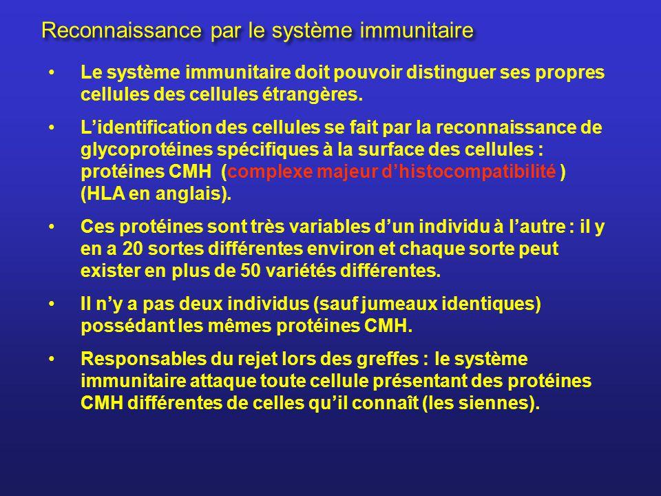 Reconnaissance par le système immunitaire Le système immunitaire doit pouvoir distinguer ses propres cellules des cellules étrangères. Lidentification