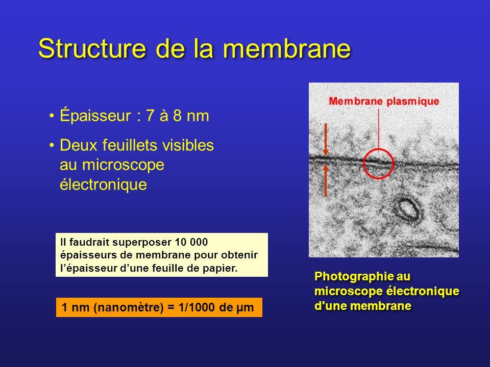 Structure de la membrane Épaisseur : 7 à 8 nm Deux feuillets visibles au microscope électronique Photographie au microscope électronique d'une membran