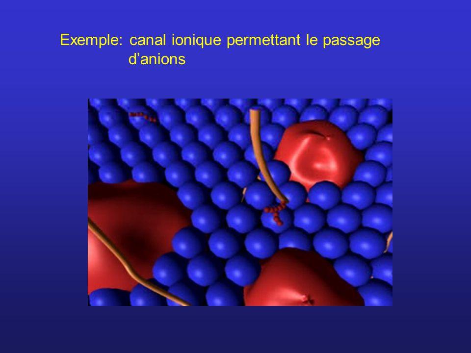 Exemple: canal ionique permettant le passage danions
