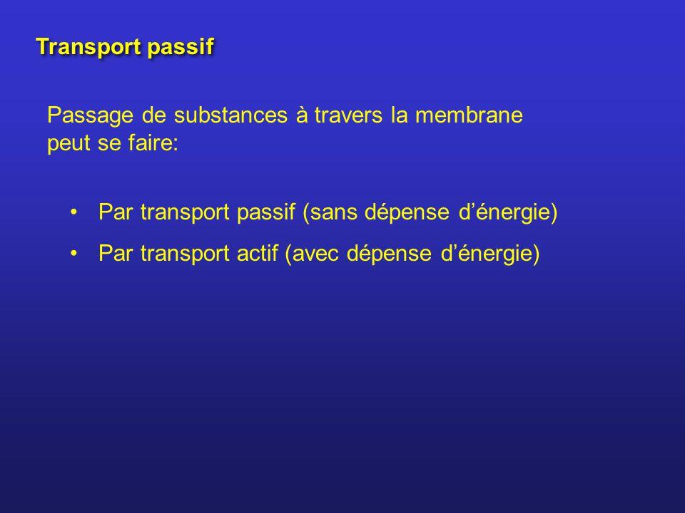 Transport passif Passage de substances à travers la membrane peut se faire: Par transport passif (sans dépense dénergie) Par transport actif (avec dép