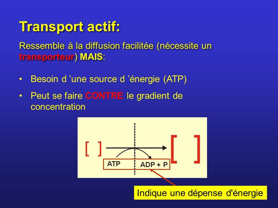 Transport actif: Ressemble à la diffusion facilitée (nécessite un transporteur) MAIS: Transport actif: Ressemble à la diffusion facilitée (nécessite u