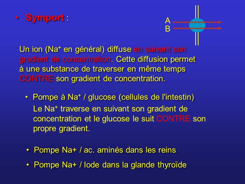A B Symport : Pompe Na+ / ac. aminés dans les reins Pompe Na+ / Iode dans la glande thyroïde Pompe Na+ / ac. aminés dans les reins Pompe Na+ / Iode da