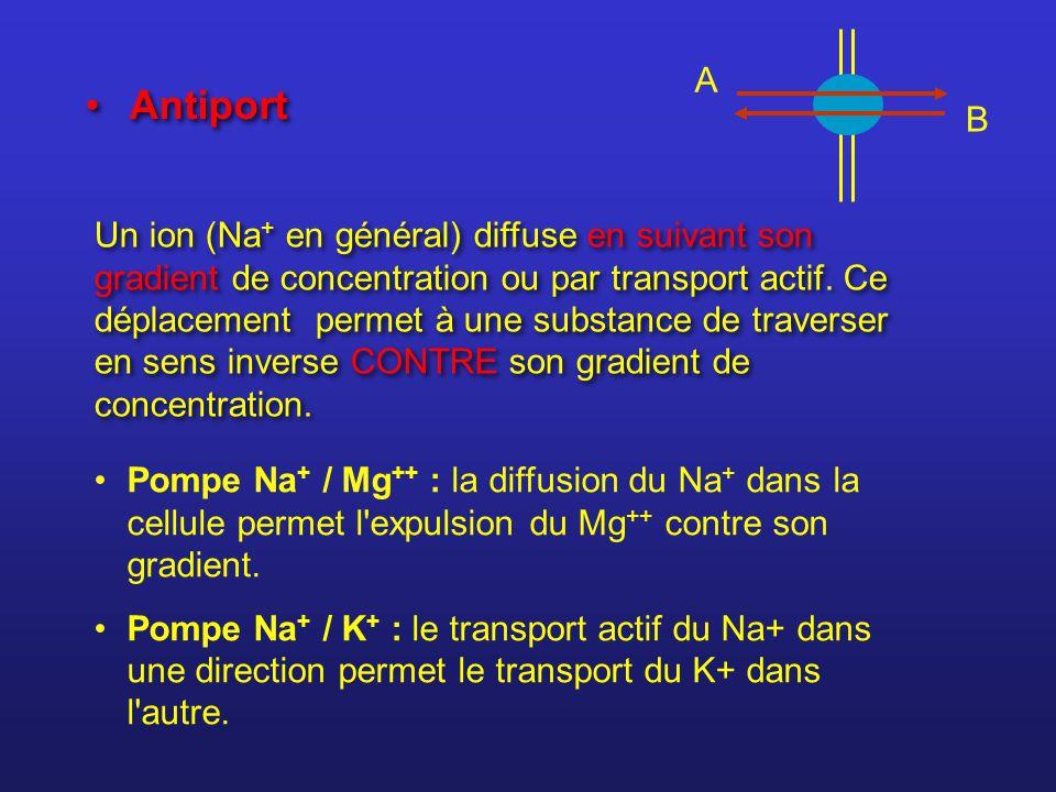 A B Antiport Un ion (Na + en général) diffuse en suivant son gradient de concentration ou par transport actif. Ce déplacement permet à une substance d