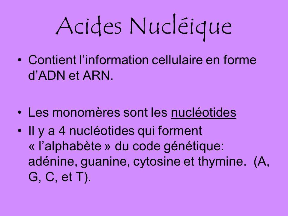 Acides Nucléique Contient linformation cellulaire en forme dADN et ARN.