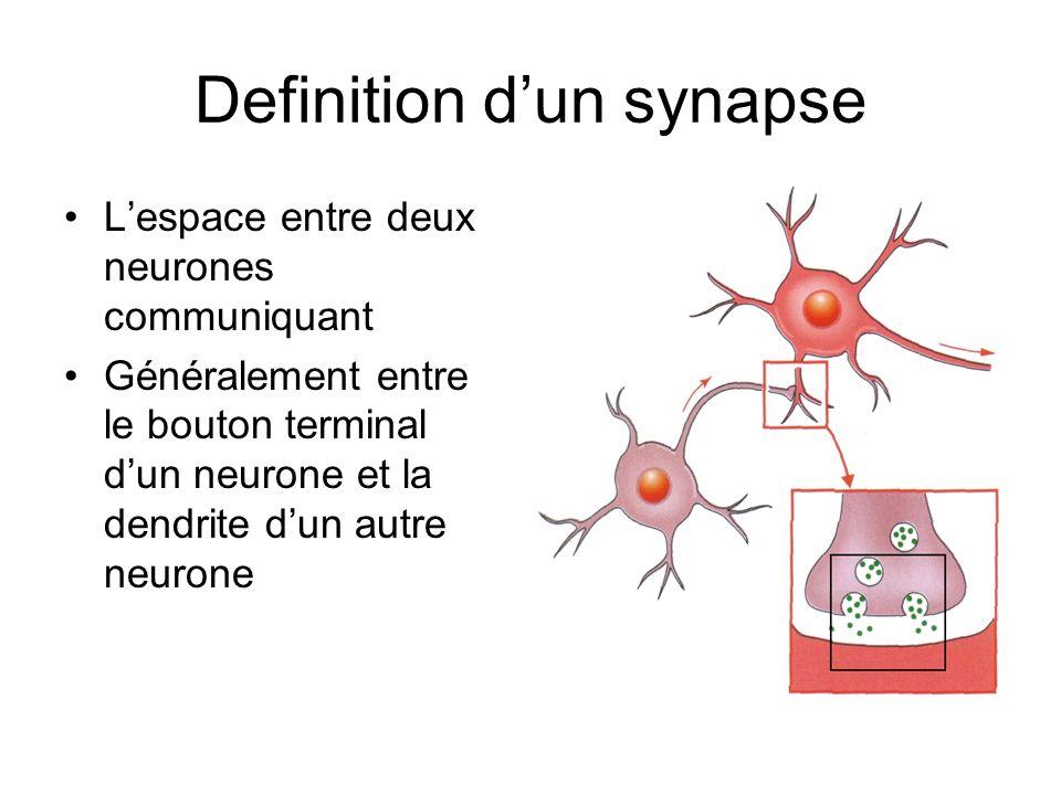 Le neurone qui donne le message est le neurone présynaptique pendant que le neurone qui reçoit le message est le neurone postsynaptique Neurone présynaptique Neurone postsynaptique La synapse est moins que 0.1 micron en largeur Le temps de passage de l influx d une cellule à l autre est ~ 0.5 ms