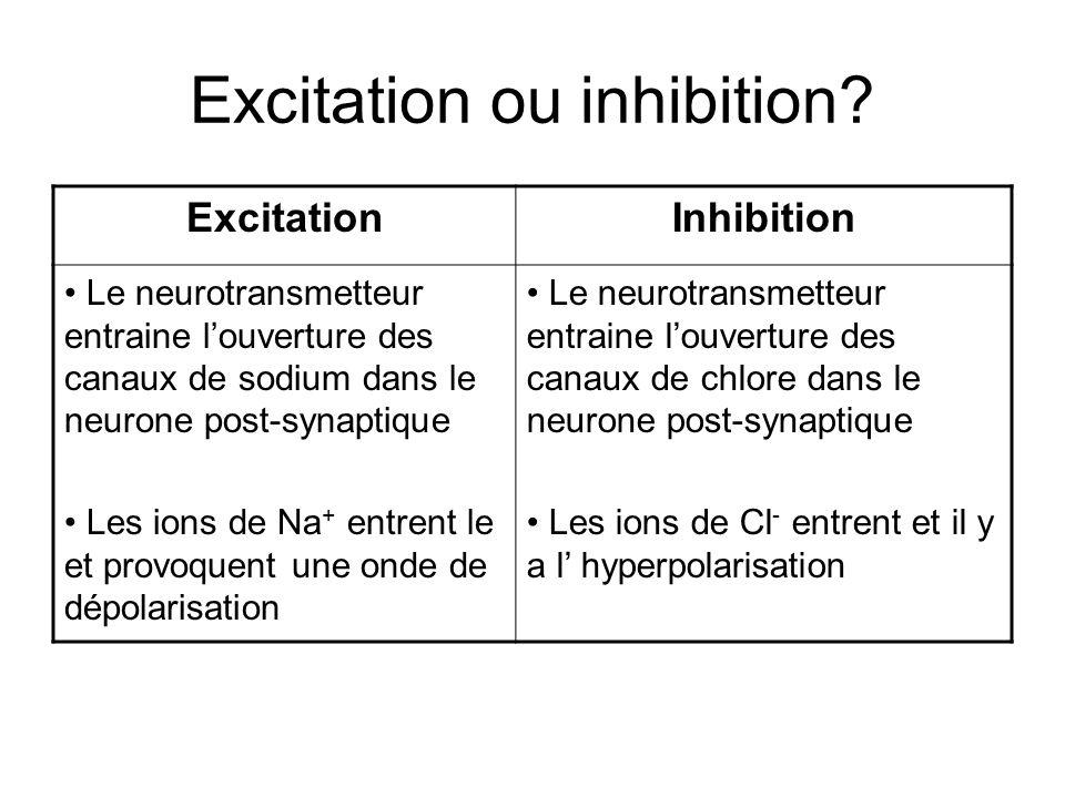 Excitation ou inhibition? ExcitationInhibition Le neurotransmetteur entraine louverture des canaux de sodium dans le neurone post-synaptique Les ions