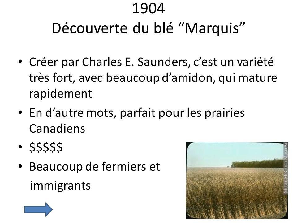 1904 Découverte du blé Marquis Créer par Charles E. Saunders, cest un variété très fort, avec beaucoup damidon, qui mature rapidement En dautre mots,