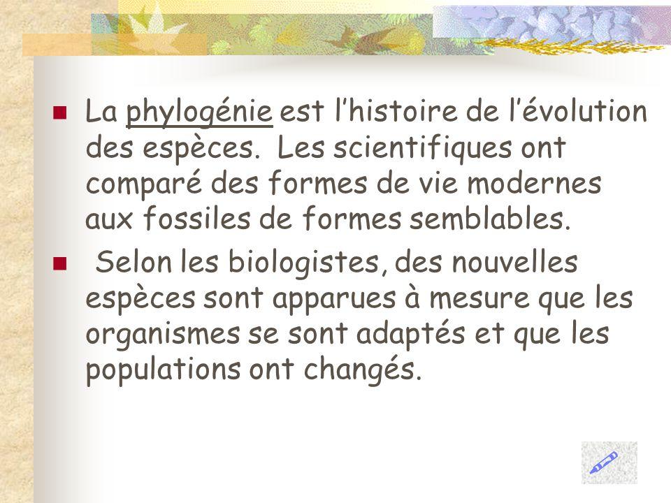La phylogénie est lhistoire de lévolution des espèces. Les scientifiques ont comparé des formes de vie modernes aux fossiles de formes semblables. Sel