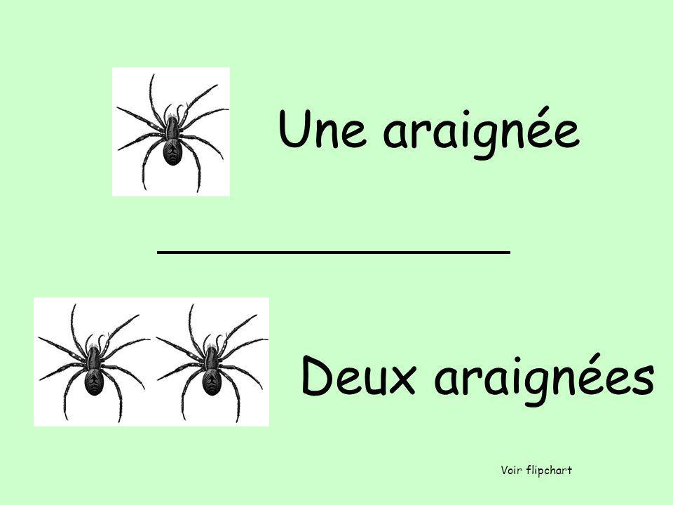 Une araignée Deux araignées Voir flipchart