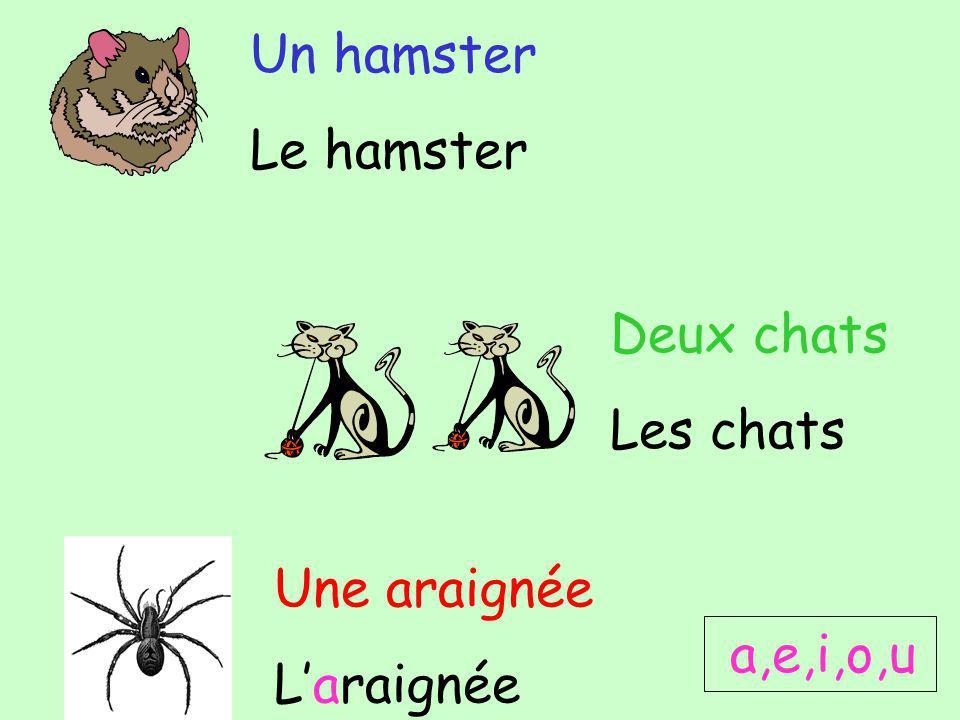 Un hamster Le hamster Deux chats Les chats Une araignée Laraignée a,e,i,o,u