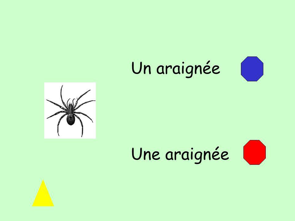 Un araignée Une araignée