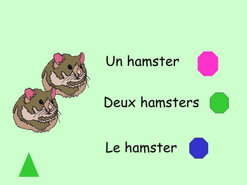 Un hamster Deux hamsters Le hamster