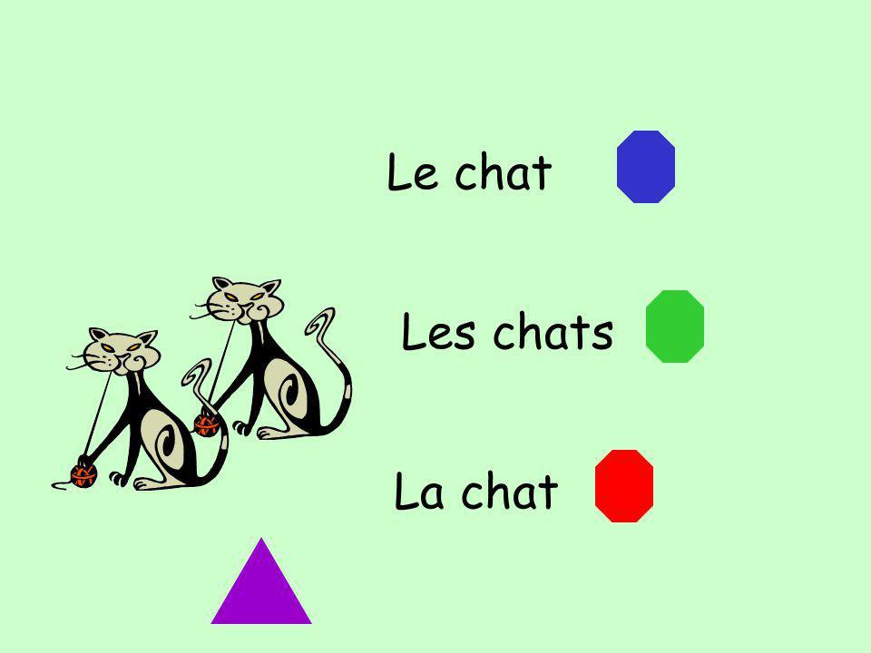 Le chat Les chats La chat