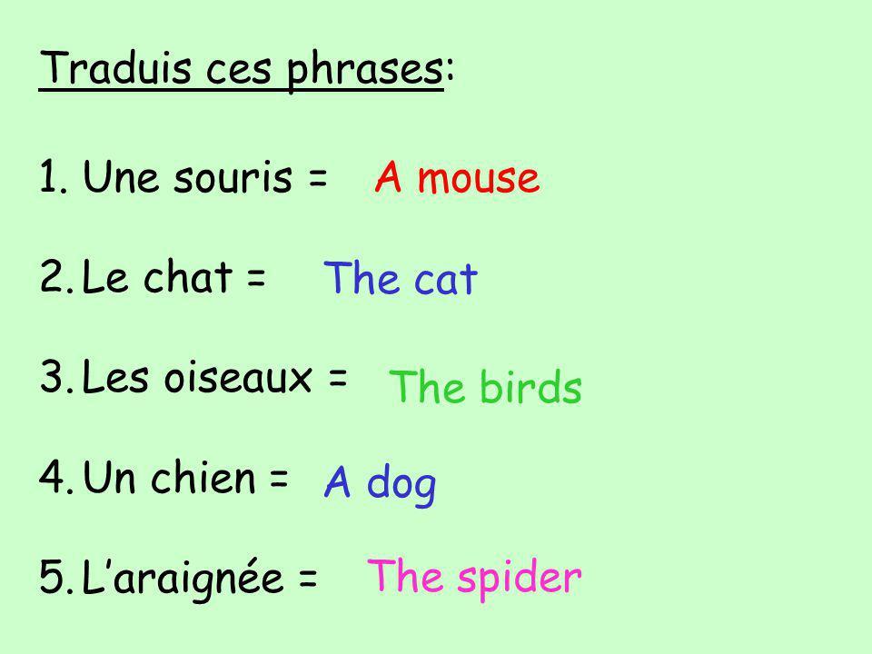 Traduis ces phrases: 1.Une souris = 2.Le chat = 3.Les oiseaux = 4.Un chien = 5.Laraignée = A mouse The cat The birds A dog The spider