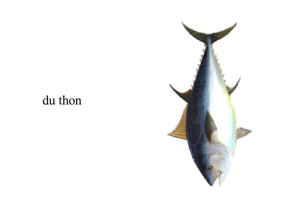 du thon