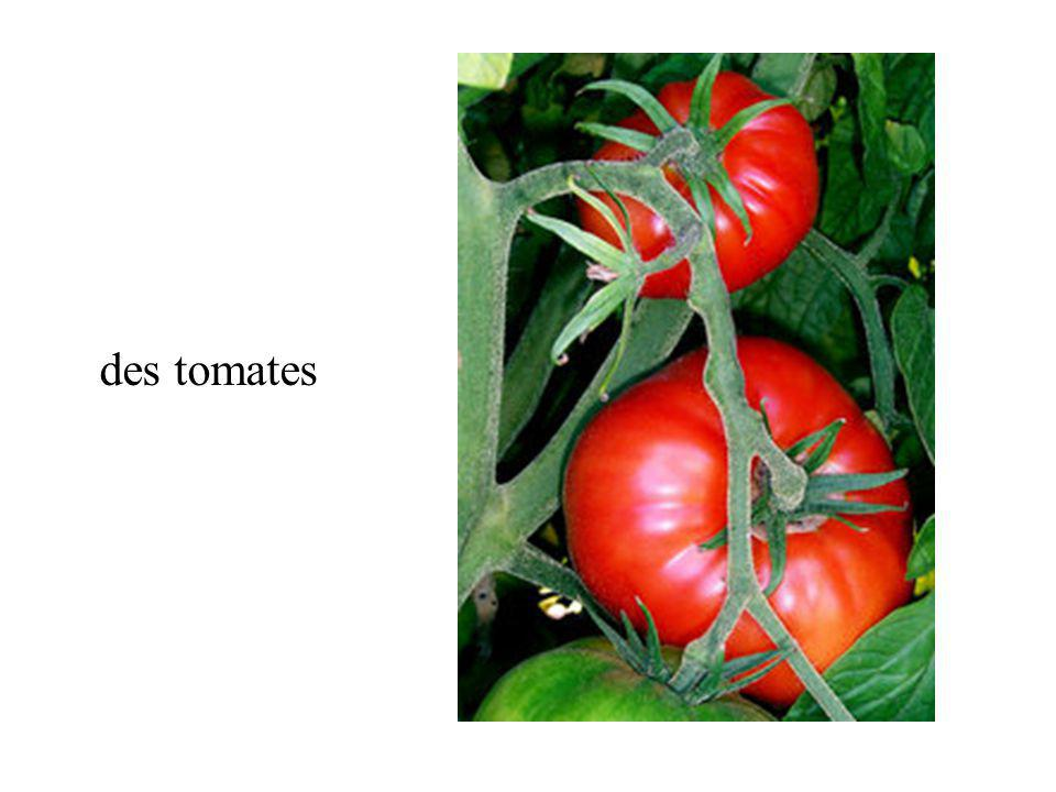 d une salade Quest-ce que cest? 6 c des tomates a des tommates b un ananas