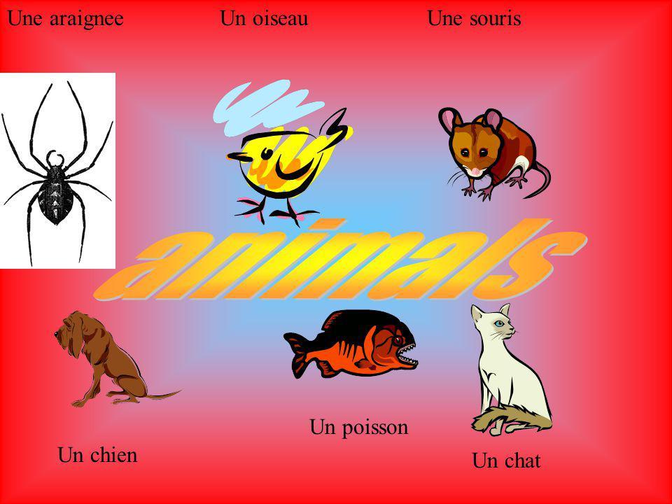 Une araigneeUn oiseauUne souris Un chien Un poisson Un chat