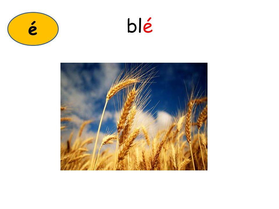 blé é