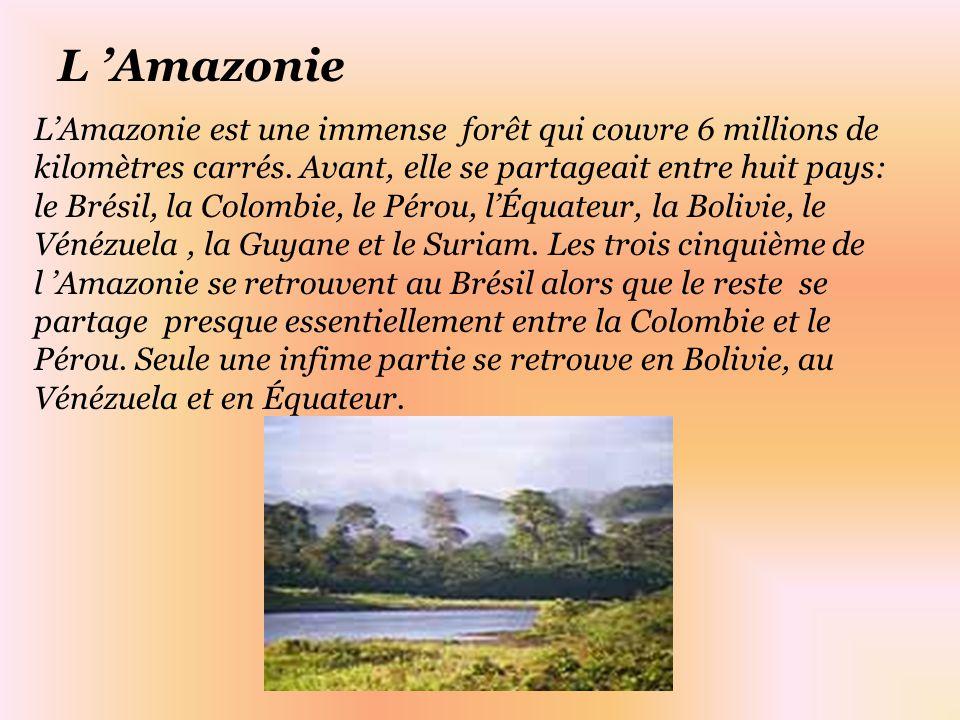 LAmazonie est une immense forêt qui couvre 6 millions de kilomètres carrés.