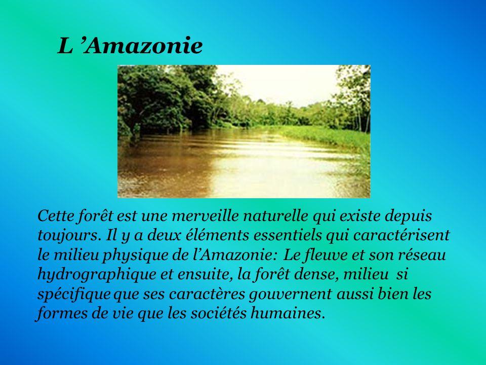 Les températures de l Amazonie sont très élevées(entre 25 C et 30 C).