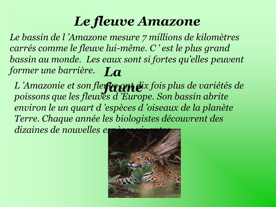 Le fleuve Amazone Le bassin de l Amazone mesure 7 millions de kilomètres carrés comme le fleuve lui-même.