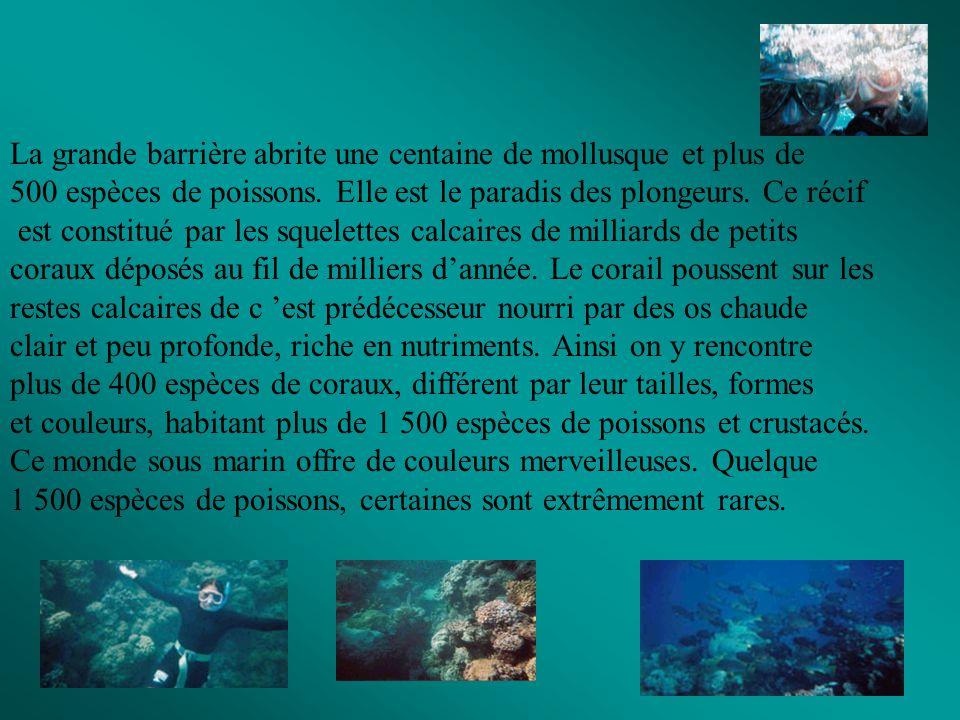 La grande barrière abrite une centaine de mollusque et plus de 500 espèces de poissons. Elle est le paradis des plongeurs. Ce récif est constitué par