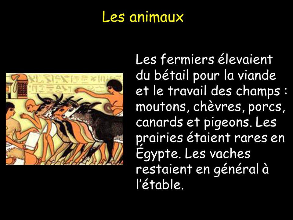 Les animaux Les fermiers élevaient du bétail pour la viande et le travail des champs : moutons, chèvres, porcs, canards et pigeons. Les prairies étaie