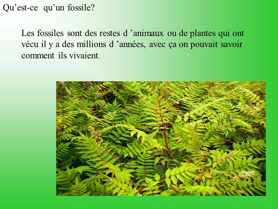 Les fossiles sont des restes d animaux ou de plantes qui ont vécu il y a des millions d années, avec ça on pouvait savoir comment ils vivaient.