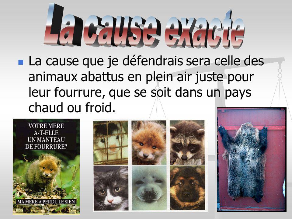 La cause que je défendrais sera celle des animaux abattus en plein air juste pour leur fourrure, que se soit dans un pays chaud ou froid.
